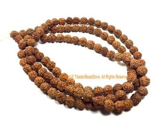 8mm Natural Rudraksha Beads from Nepal - Natural Seed Beads - Yoga Mala - Rudraksha Seed Mala Beads - 108 Rudraksha Beads - PB200
