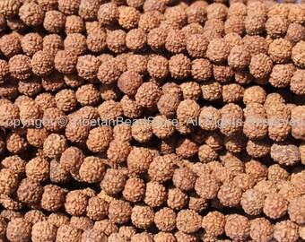 10 beads - 5-6mm Natural Rudraksha Seed Beads - Nepalese Tibetan Rudraksha Seed Prayer Beads TibetanBeadStore Mala Supplies - LPB68-10