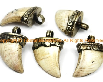 Tibetan Solid Naga Conch Shell Bear Claw Necklace Jewelry Pendant with Handcarved Tibetan Silver Metal Cap- Boho Ethnic Gothic- WM6103B