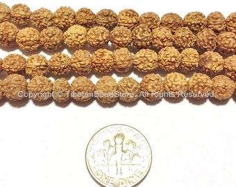 20 beads 7mm Natural Rudraksha Seed Beads - 7mm Nepalese Tibetan Rudraksha Seed Beads Mala Making Supplies - TibetanBeadStore - LPB65-20