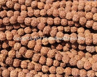 20 BEADS - 5-6mm Natural Rudraksha Seed Beads - Nepalese Tibetan Rudraksha Seed Prayer Beads Mala Making Supplies - LPB68-20