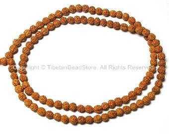 108 beads - 7mm Natural Rudraksha Seed Beads - Nepalese Tibetan Rudraksha Seed Prayer Mala Beads - PB65A