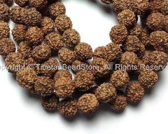 10 beads - 9mm-10mm Natural Rudraksha Seed Beads - Nepalese Rudraksha Seed Beads - Mala Making Supplies - LPB81B-10