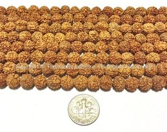10 BEADS 8mm Natural Rudraksha Seed Beads - Nepalese Tibetan Rudraksha Seed Beads - TibetanBeadStore Mala Making Supplies - LPB66-10