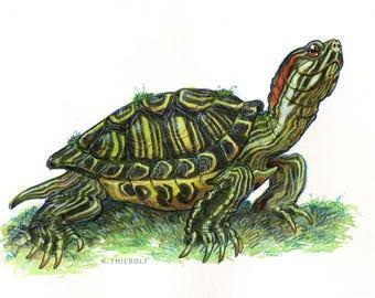 "Red-Eared Slider PRINT - 5x7"" turtle wall art illustration"