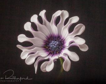 Fine Art flower print