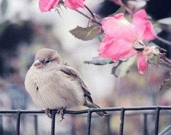 Sleepy Bird Photograph - Sparrow - New York Street Bird - Pink Roses - Nursery Wall Decor - Sweet Bird - Nature Art - Bird Photograph