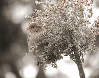 Bird Photograph - Peek'a Boo - Sparrow - Corn Stalk - Bird Art - Nature - Nursery Art Decor - Wall Decor - Countryside - Nature Photography