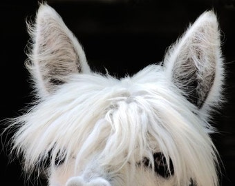 Peek'a Boo  - Alpaca Photograph - Nursery Art - Kid's Room Decor - Wall Decor - Animal Art - Animal Photograph