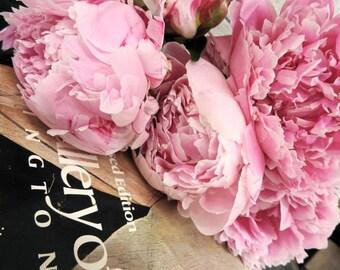 Peony Photograph - Pink Peony - Floral Wall Decor - Nature Flower - Peony Flower - New York Peony Fine Art - Nature Art - Flower Photography