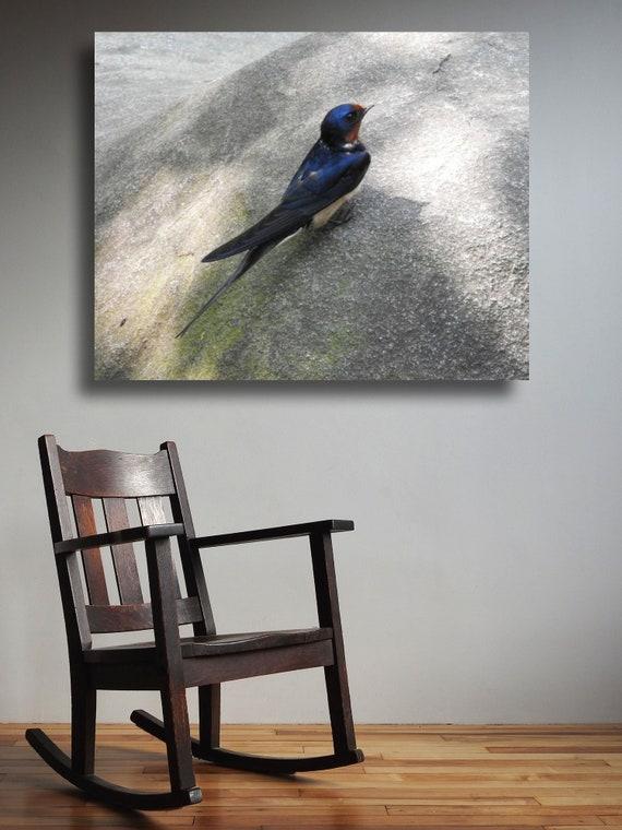 Groovy Bird Photograph Barn Swallow Bird Dark Blue Bird Forked Tail Bird Spring Migrant Bird Wall Decor Nature Photograph Theyellowbook Wood Chair Design Ideas Theyellowbookinfo