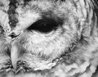 Eye of Owl - Bird Photograph - Mysterious Eye - Wildlife Bird - Short-eared Owl - Bird Art - Wall Decor - Nature Bird - Owl Photograph