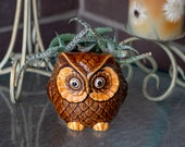 Aloes in Owl