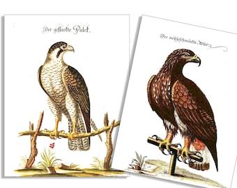 Vintage Eagle & Hawk 6 Card and Envelope Set