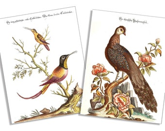 Vintage Hummingbird & Peacock 6 Card and Envelope Set
