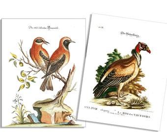 Vintage Vulture & Red Birds 6 Card and Envelope Set