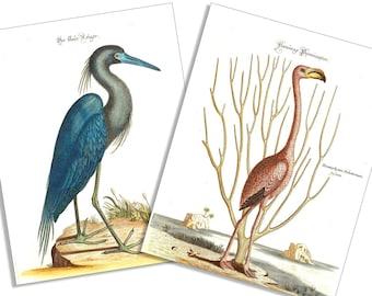 Vintage Flamingo and Blue Heron-6 Card and Envelope Set