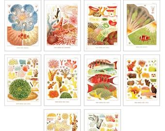 Vintage Oceanic Coral Reef Postcard Set of 10