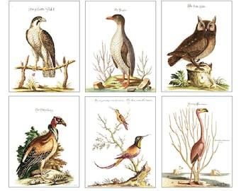 Vintage Bird Portraits 6 Cards & Envelopes Set A