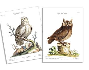 Vintage Owls-6 Card & Envelope Set