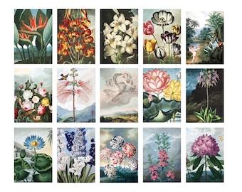 Temple of Flora Vintage Botanical Postcards- Set of 15 (Expanded Collection!)