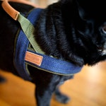 Dog Harness Denim, MissFlo, Leather detail, Handmade, made to measure, MissFlo.