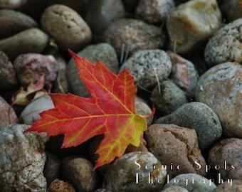 Red Maple Leaf, Stones, Autumn, Afternoon Light, Macro Photograph - Fine Art Photograph