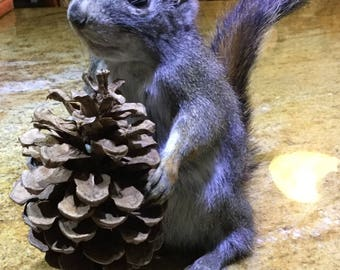 Something Squirrely this Way Comes! Vintage Taxidermy Grey Squirrel with A present