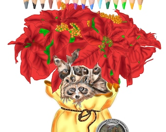 Coloring pages, coloring book, Poinsettia, christmas, raccoon,christmas