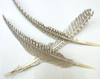 15-25cm Natural Feather Nature Tone Lot of 20pieces - 4721  -