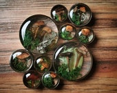 Enchanted forest, moss and mushrooms plugs. FOR PAIR. 10mm and up