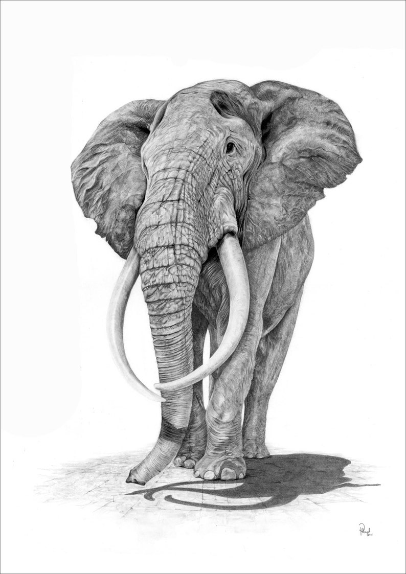 Elephant pencil drawing print