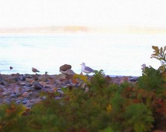 Seagull on the Beach, Rocky Coastline, New England Coastline