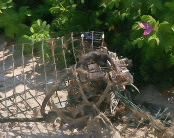 Lobster Trap, Beach, Tangled Rope, Rosa Rogusa, Coastline