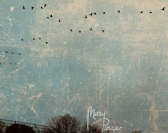 Photo, Birds, Birds in Crazed Sky, Overhead Birds, Turquoise Skies, Grunge Photos