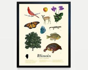 Illinois State Symbols Typology - Illinois - Illinois Poster - Illinois Wall Art - Illinois Decor - Chicago - Chicago Art - Illinois Map