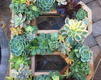 """Succulent letters any letter or number 20""""x17"""""""