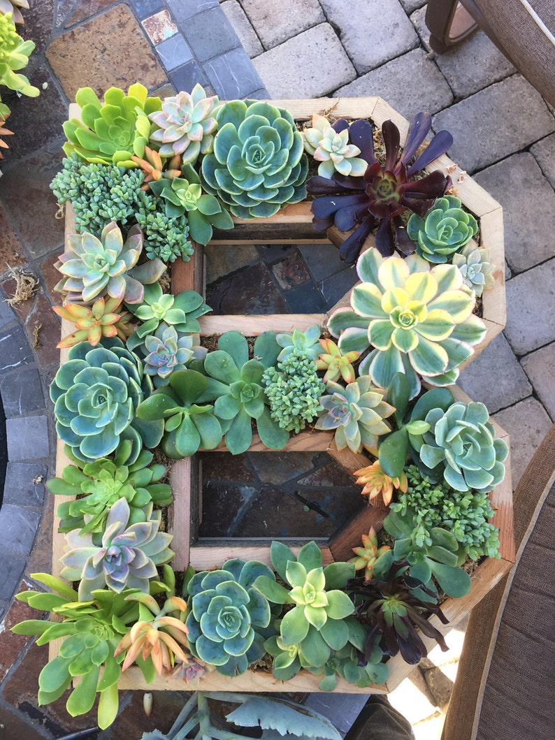 Succulent letters any letter or number 20x17 image 0