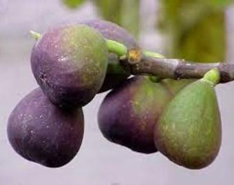 Mediterranean Fig Premium Fragrance Oil 16 oz. - 8 oz. - 4 oz. - 2 oz. - 1 oz. - 1/2 oz. Bottle Or 1/3 oz. Roll–On Bottle