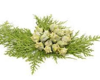 Cypress Essential Oil ( Cupressus Semperviren  ) Pure Essential Oil Available In Several Sizes Use For Aroma Therapy Soap Making Bath Body