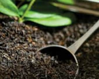 Black Tea Fragrance Oil