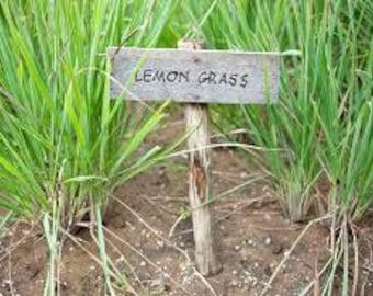 Lemon Grass Premium Fragrance Oil Available In Several Sizes