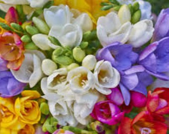 Freesia Premium Fragrance Oil  Available In Several Sizes