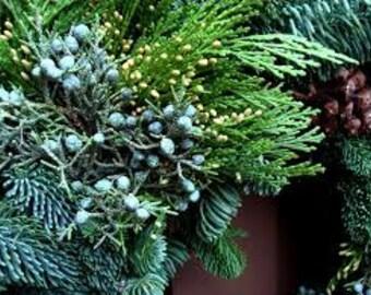 Balsam Cedar Yankee Type Fragrance Oil
