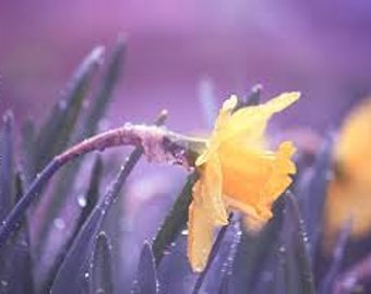 Sweet Rain Premium Fragrance Oil Available In Several Sizes