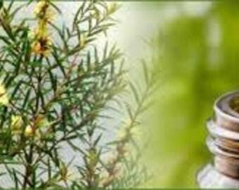 Tea Tree Pure Essential Oil ( Melaleuca Alternifolia)   Available In Several Sizes