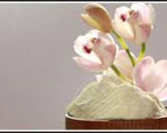 Rice Flower & Shea Fragrance Oil