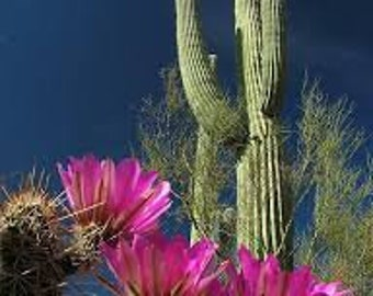 Desert Cactus Premium Fragrance Oil Use To Make Personal Fragrance - Candles- Soap- Bath Products - Cleaning Products - Home Fragrance