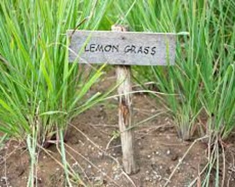 Lemon Grass Fragrance Oil