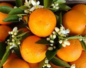 Orange Blossom Premium Fragrance Oil  Available In Several Sizes